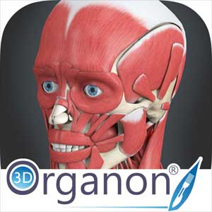 Buy 3D Organon VR Anatomy CD Key Compare Prices