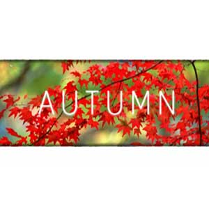 Buy Autumn CD Key Compare Prices