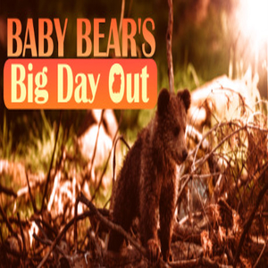 Baby Bears Big Day Out