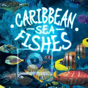 Buy Caribbean Sea Fishes CD Key Compare Prices