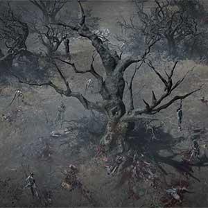 darker roots