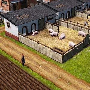 Farm Manager 2021 - Piggery