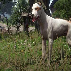 loyal dog Tinker