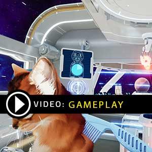 Kitten'd Gameplay Video