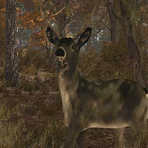 deer sub-species