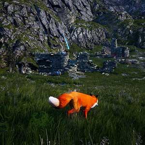 ordinary red fox