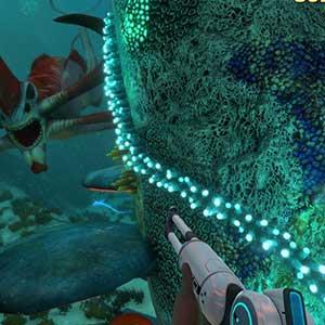 Dive Into a Vast Underwater World