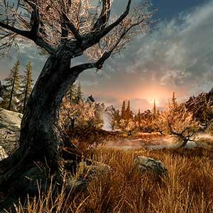 The Elder Scrolls 5 Skyrim VR - Forest